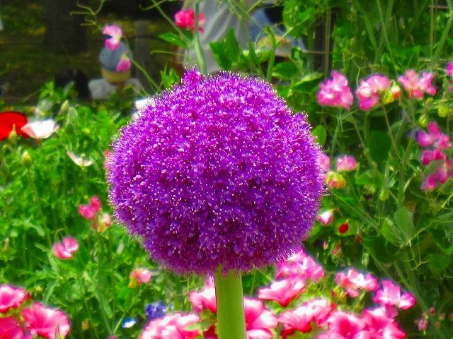 【花の祭典(紹介)】京都府立植物園_e0237645_17473953.jpg