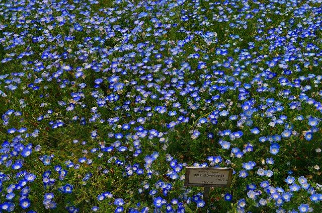 【花の祭典(紹介)】京都府立植物園_e0237645_1747571.jpg