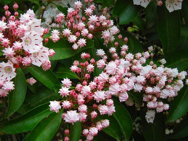 【花の祭典(紹介)】京都府立植物園_e0237645_17481096.jpg