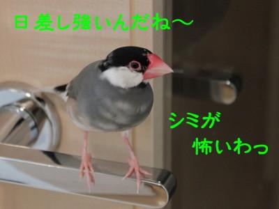 b0158061_211607.jpg