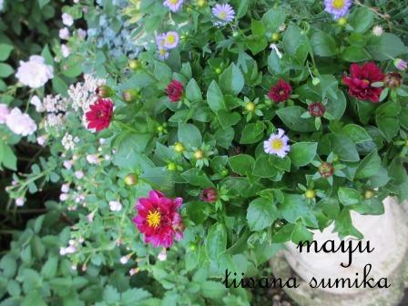 """""""ブルー&ホワイト""""のお花の清らかさ~_a0243064_0315110.jpg"""