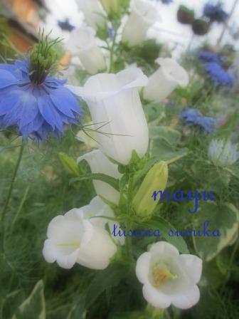 """""""ブルー&ホワイト""""のお花の清らかさ~_a0243064_034378.jpg"""