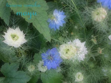 """""""ブルー&ホワイト""""のお花の清らかさ~_a0243064_0391795.jpg"""