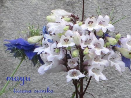 """""""ブルー&ホワイト""""のお花の清らかさ~_a0243064_0512222.jpg"""