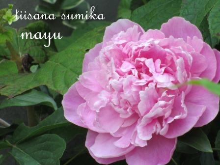 """""""ブルー&ホワイト""""のお花の清らかさ~_a0243064_0552555.jpg"""