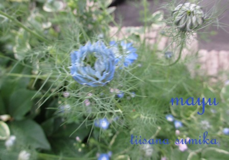"""""""ブルー&ホワイト""""のお花の清らかさ~_a0243064_058483.jpg"""