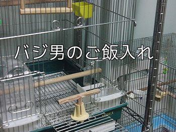 f0196665_084066.jpg