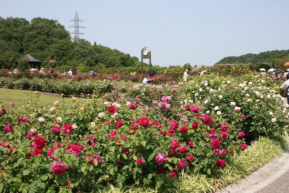 花フェスタ記念公園へ行ってきました♪_c0248269_17211620.jpg