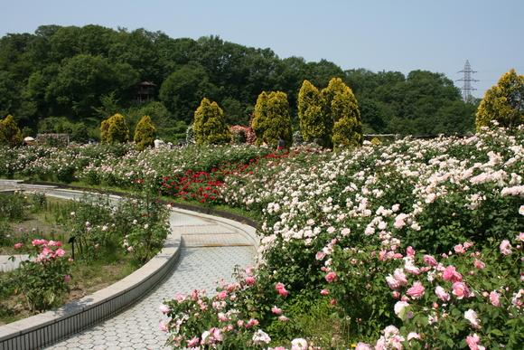 花フェスタ記念公園へ行ってきました♪_c0248269_1721422.jpg
