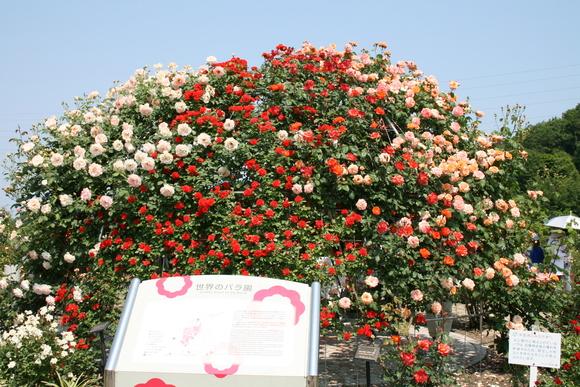 花フェスタ記念公園へ行ってきました♪_c0248269_17234855.jpg