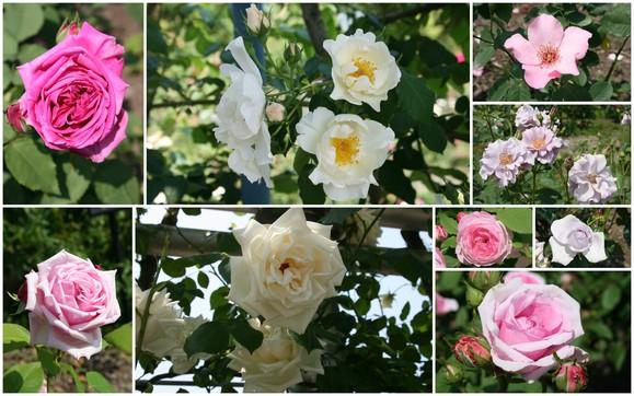 花フェスタ記念公園へ行ってきました♪_c0248269_17294519.jpg