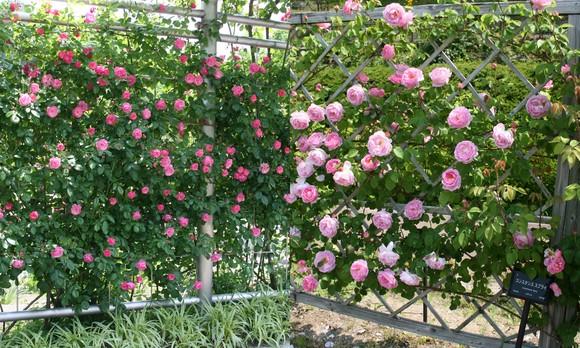 花フェスタ記念公園へ行ってきました♪_c0248269_17525962.jpg