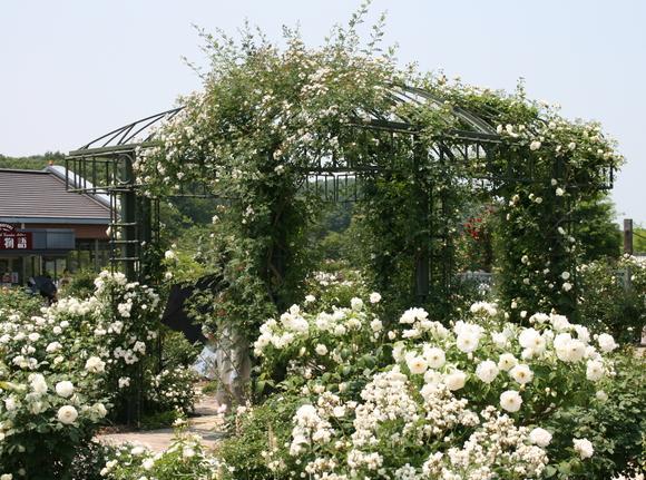 花フェスタ記念公園へ行ってきました♪_c0248269_18144321.jpg