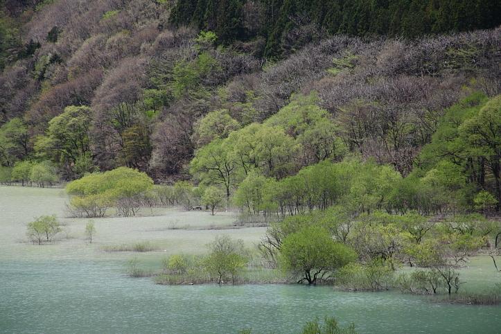 日光市 五十里湖の新緑_e0165983_14491479.jpg