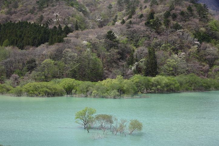 日光市 五十里湖の新緑_e0165983_1450416.jpg