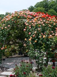 花フェスタ記念公園⑤_b0142989_2248268.jpg