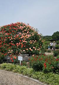 花フェスタ記念公園⑤_b0142989_22514047.jpg