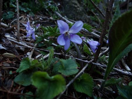 宿周辺の花たち_e0120896_6451547.jpg