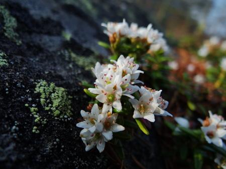 宿周辺の花たち_e0120896_6462165.jpg