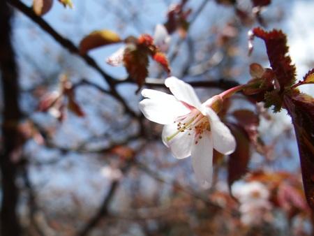 宿周辺の花たち_e0120896_6482574.jpg