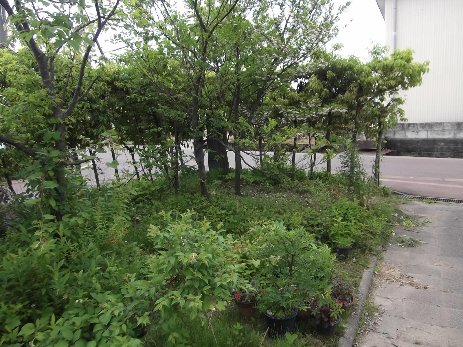 藪全景など_a0203003_1330067.jpg