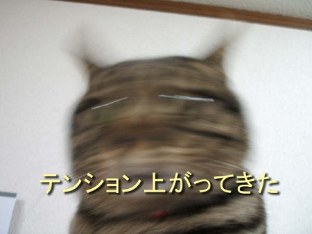 e0127007_16442356.jpg