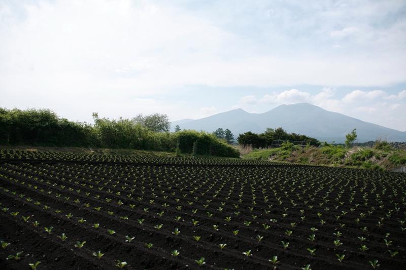 浅間山と畑_f0091207_2351324.jpg