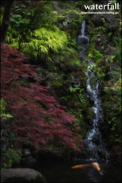 滝のある庭_f0100215_059562.jpg