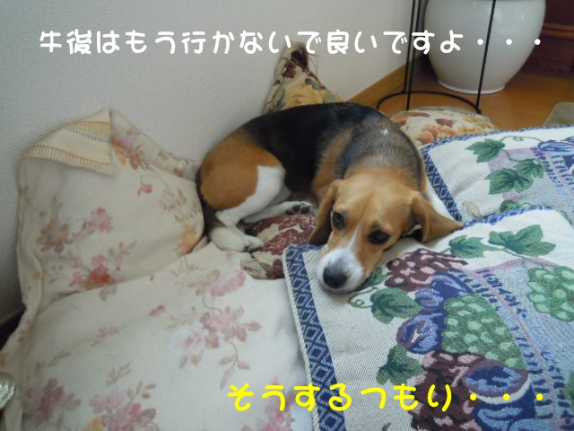 c0166622_9383838.jpg