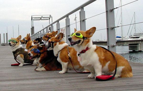 Dogglesかけて集まって_d0102523_9535526.jpg