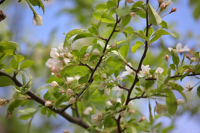 飯盛山も花々が咲いてきました_b0179231_1925742.jpg