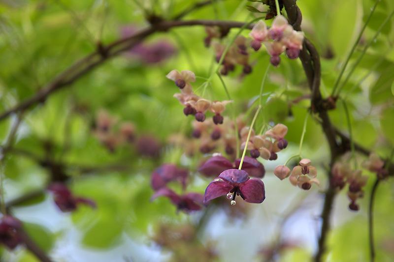 飯盛山も花々が咲いてきました_b0179231_193396.jpg