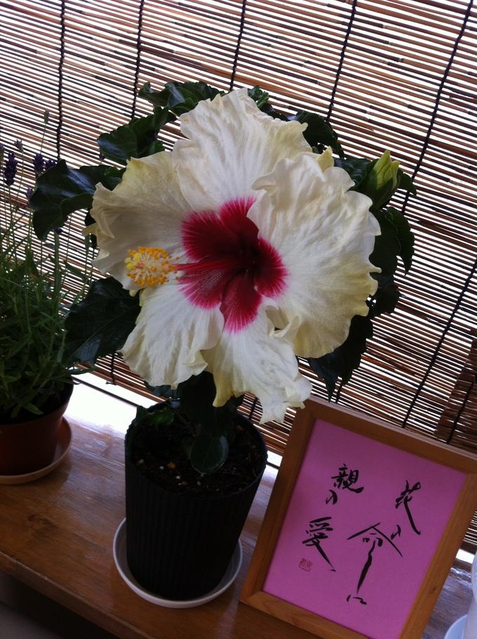 お花の好きな方_b0213831_12514694.jpg