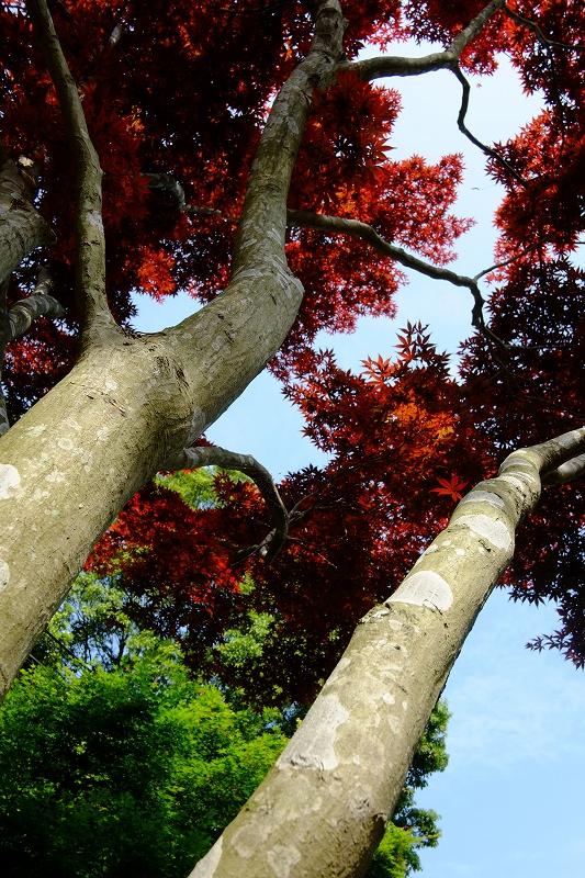鎌倉 海像寺_f0050534_831429.jpg