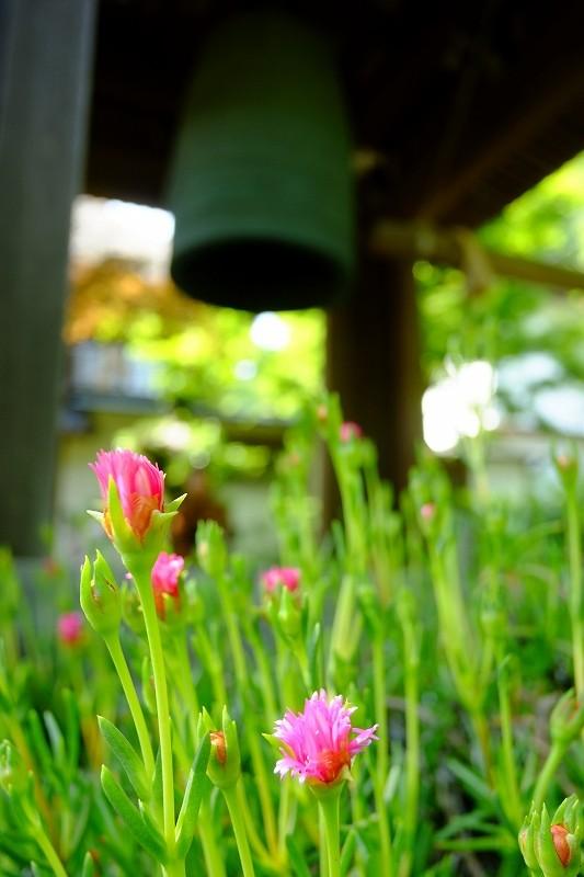 鎌倉 海像寺_f0050534_832068.jpg