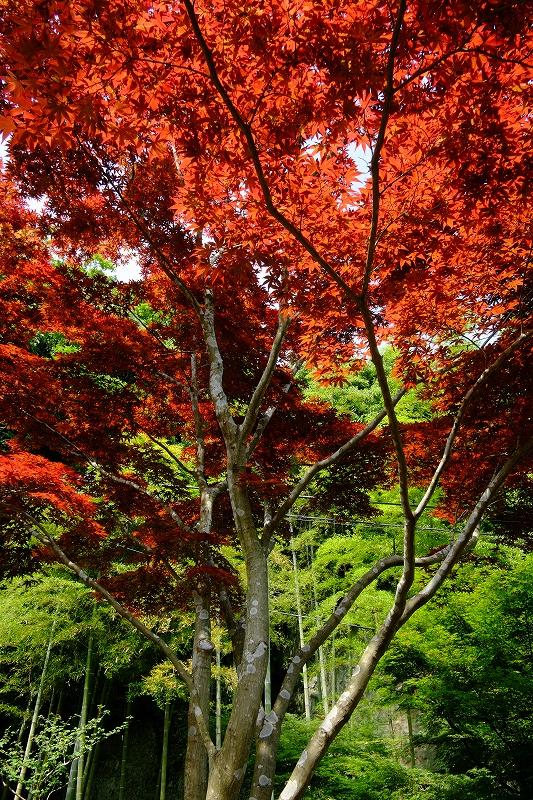 鎌倉 海像寺_f0050534_832644.jpg
