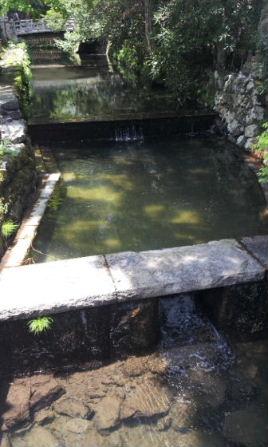 初夏の高野山_a0059035_14322650.jpg