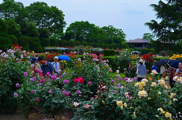 【花の祭典?③バラ園】京都府立植物園_e0237645_2115882.jpg