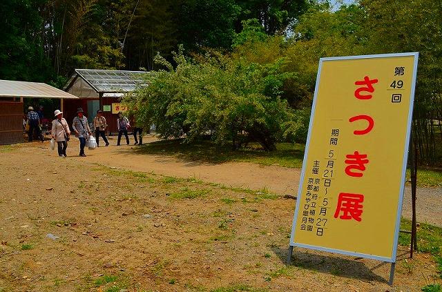【花の祭典?①さつき】京都府立植物園_e0237645_21272294.jpg