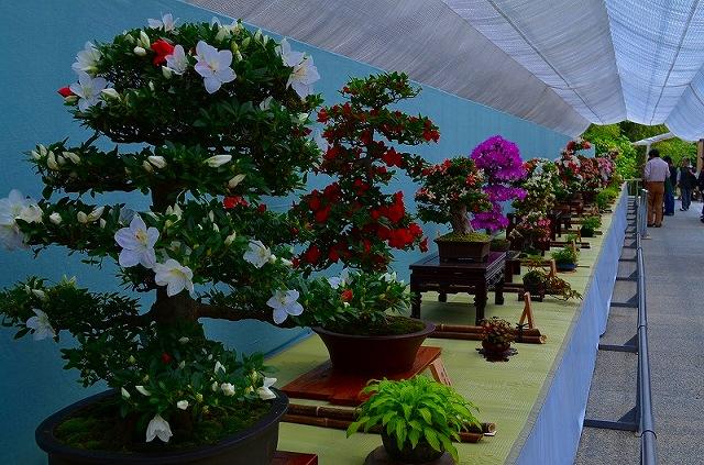 【花の祭典?①さつき】京都府立植物園_e0237645_21273555.jpg