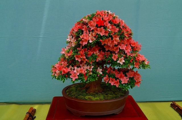 【花の祭典?①さつき】京都府立植物園_e0237645_21284677.jpg