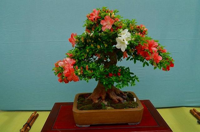 【花の祭典?①さつき】京都府立植物園_e0237645_2129491.jpg