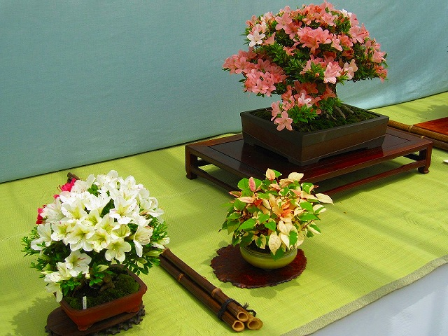 【花の祭典?①さつき】京都府立植物園_e0237645_21295628.jpg