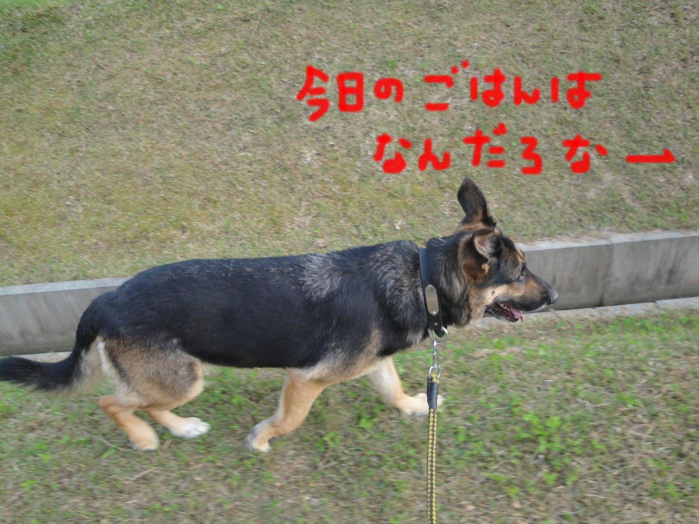 b0113663_15345164.jpg