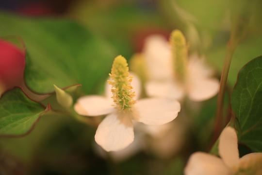 ベランダで咲いた♪_f0158364_11171835.jpg