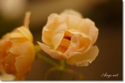 薔薇のお庭_c0243369_015294.jpg