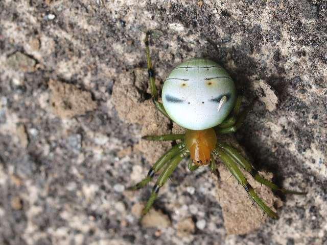 アコガレ虫に会いに行く。_b0135573_19382447.jpg