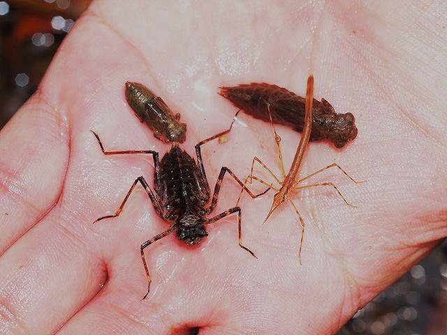 アコガレ虫に会いに行く。_b0135573_19392357.jpg