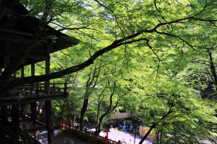 貴船神社_e0051888_23365350.jpg