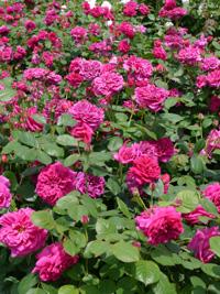 花フェスタ記念公園⑥_b0142989_041415.jpg